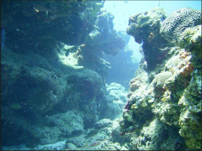 Cozumel-Scuba-Diving-1
