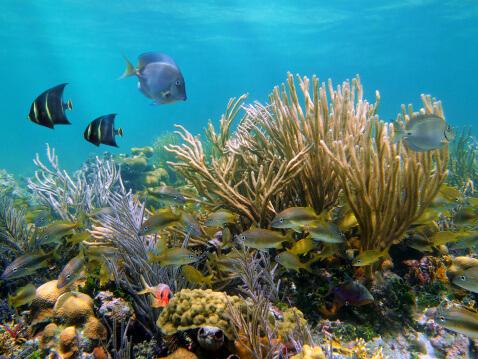 Cozumel-snorkel-2