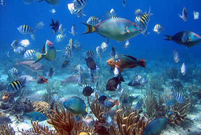 Cozumel-snorkel-5