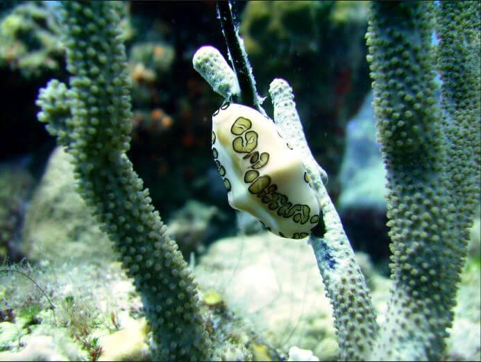 Mesoamerican-Coral-reef-Ocean-Scuba-Diving-24