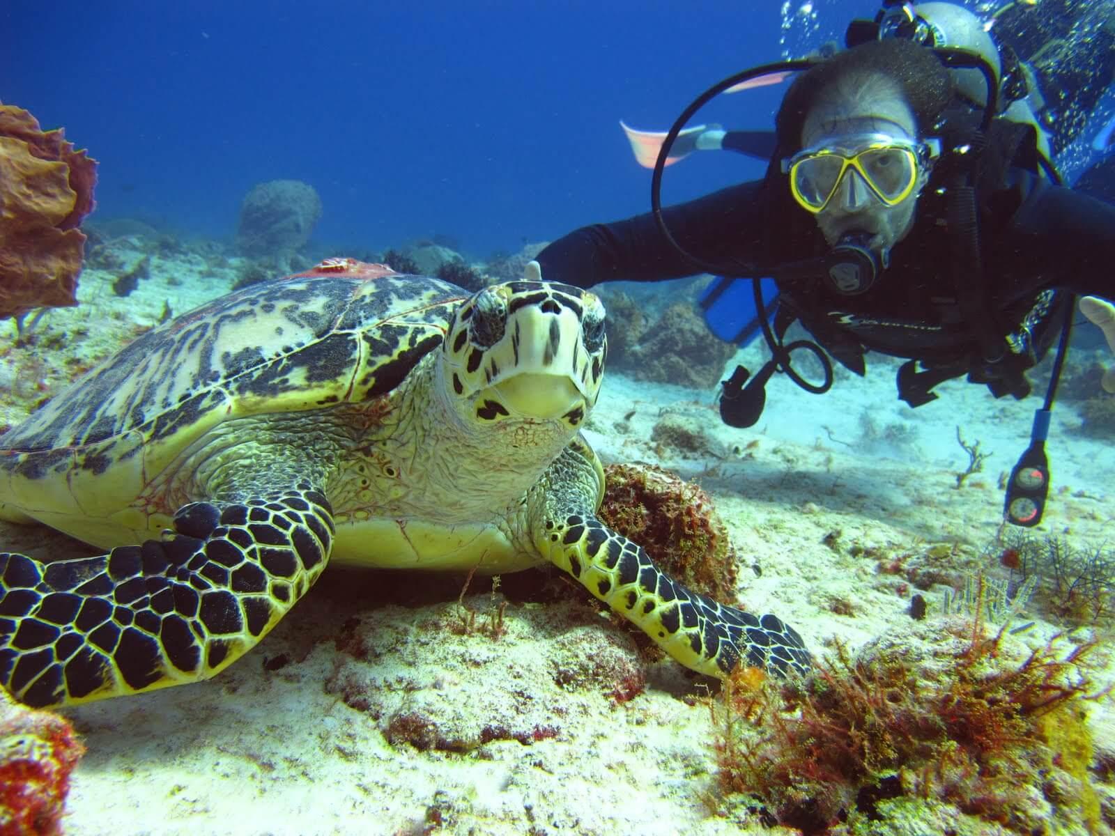 Mesoamerican-Coral-reef-Ocean-Scuba-Diving-30