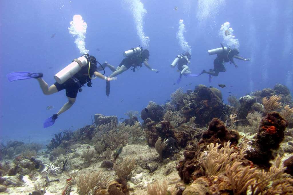 Mesoamerican-Coral-reef-Ocean-Scuba-Diving-31