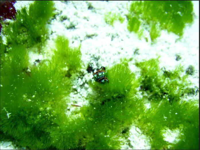 Mesoamerican-Coral-reef-Ocean-Scuba-Diving-33