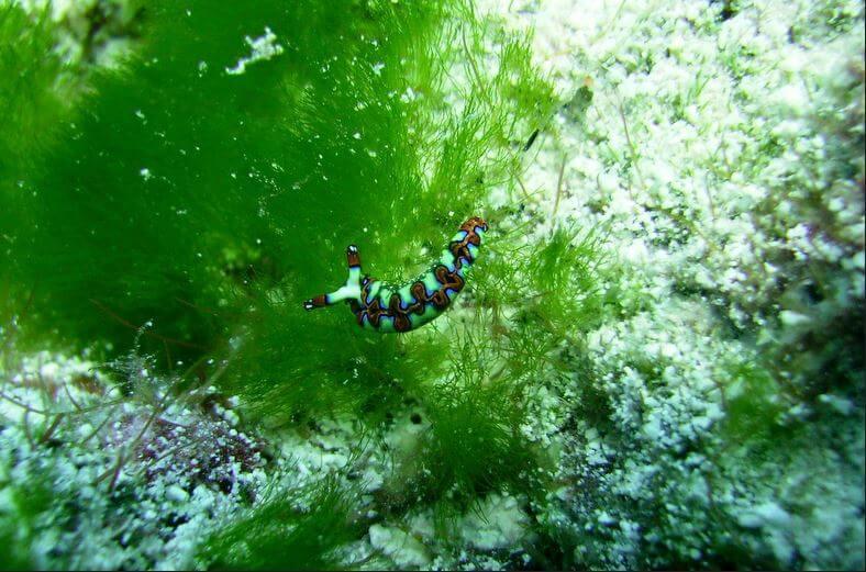 Mesoamerican-Coral-reef-Ocean-Scuba-Diving-34