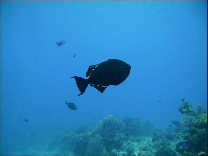 Mesoamerican-Coral-reef-Ocean-Scuba-Diving-35