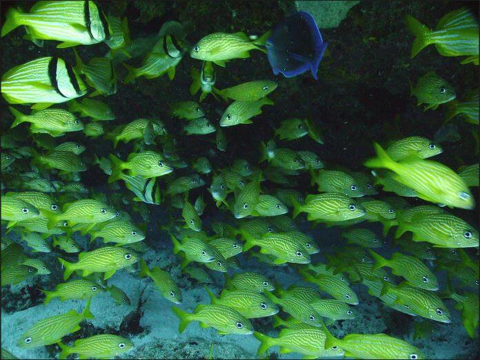 Mesoamerican-Coral-reef-Ocean-Scuba-Diving-36