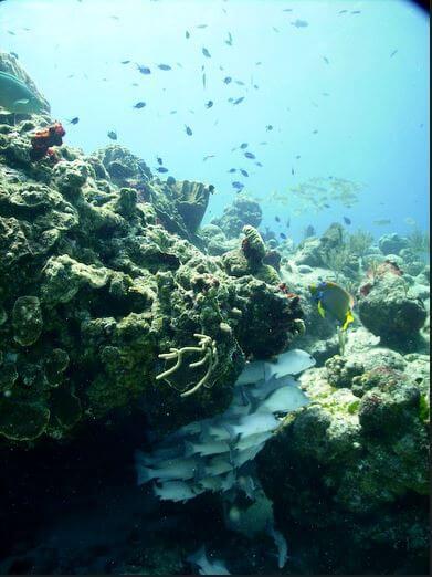 Mesoamerican-Coral-reef-Ocean-Scuba-Diving-38