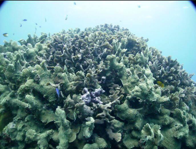 Mesoamerican-Coral-reef-Ocean-Scuba-Diving-39