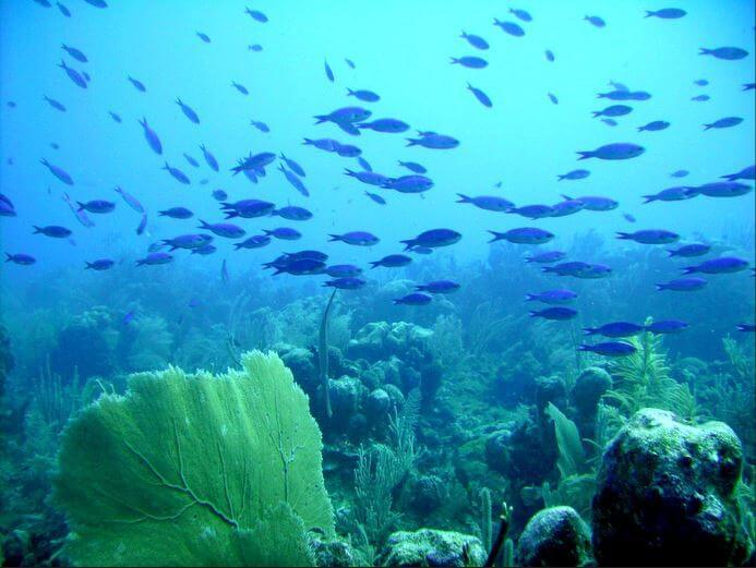 Mesoamerican-Coral-reef-Ocean-Scuba-Diving-40