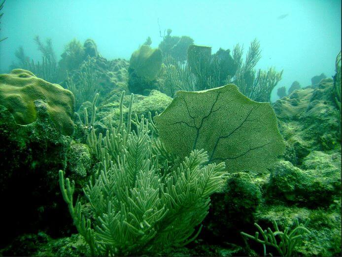Mesoamerican-Coral-reef-Ocean-Scuba-Diving-41