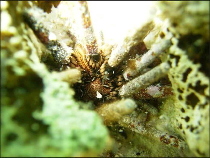 Mesoamerican-Coral-reef-Ocean-Scuba-Diving-43