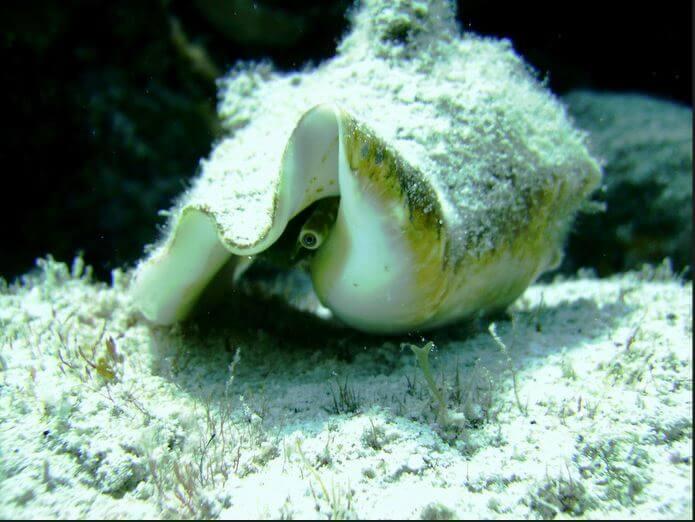 Mesoamerican-Coral-reef-Ocean-Scuba-Diving-8