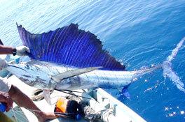 Riviera-Maya-Fishing-Charters-19