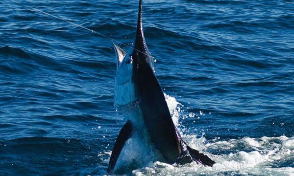 Riviera-Maya-Fishing-Charters-20