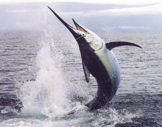 Riviera-Maya-Fishing-Charters-23