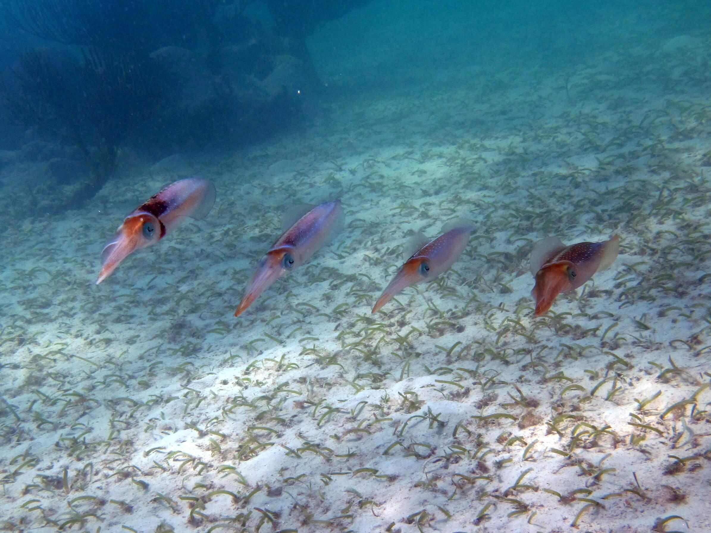 Riviera-Maya-Snorkeling-10