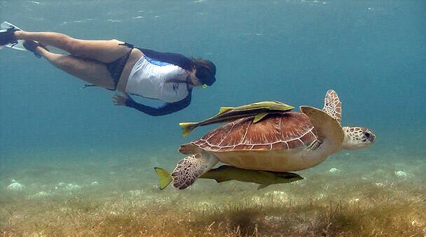 Riviera-Maya-Snorkeling-17