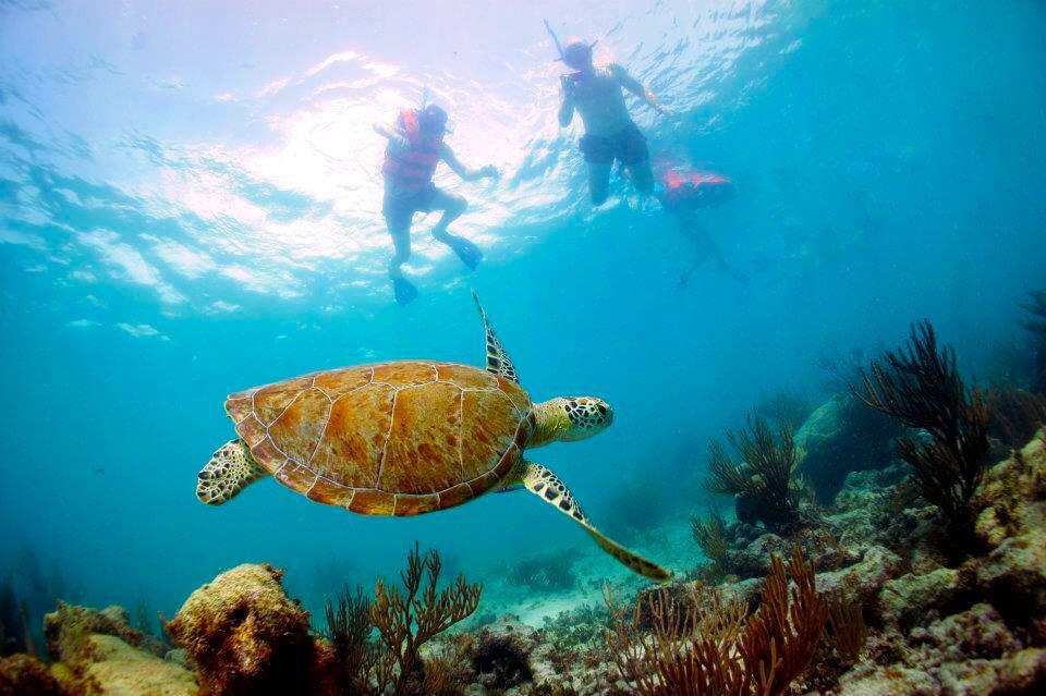 Riviera-Maya-Snorkeling-3