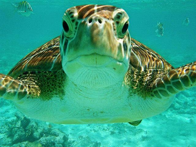 Riviera-Maya-Snorkeling-4