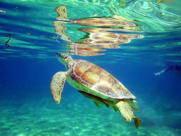 Riviera-Maya-Snorkeling-5