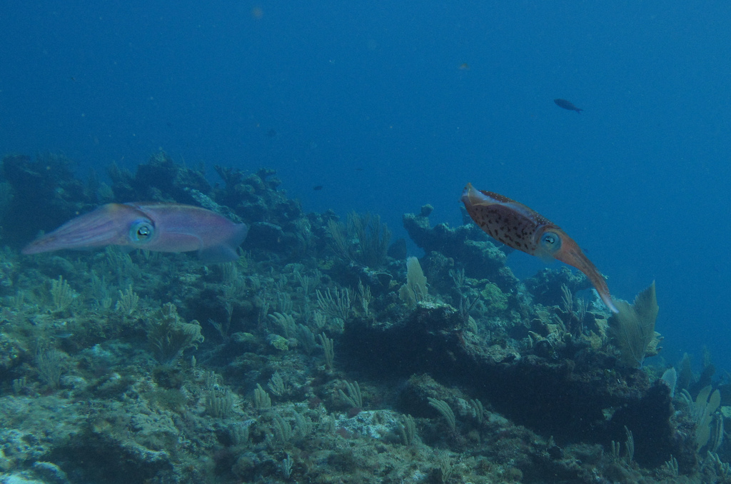 Scuba-Diving-Isla-Mujeres-Fish-CareyDiveCenter-1