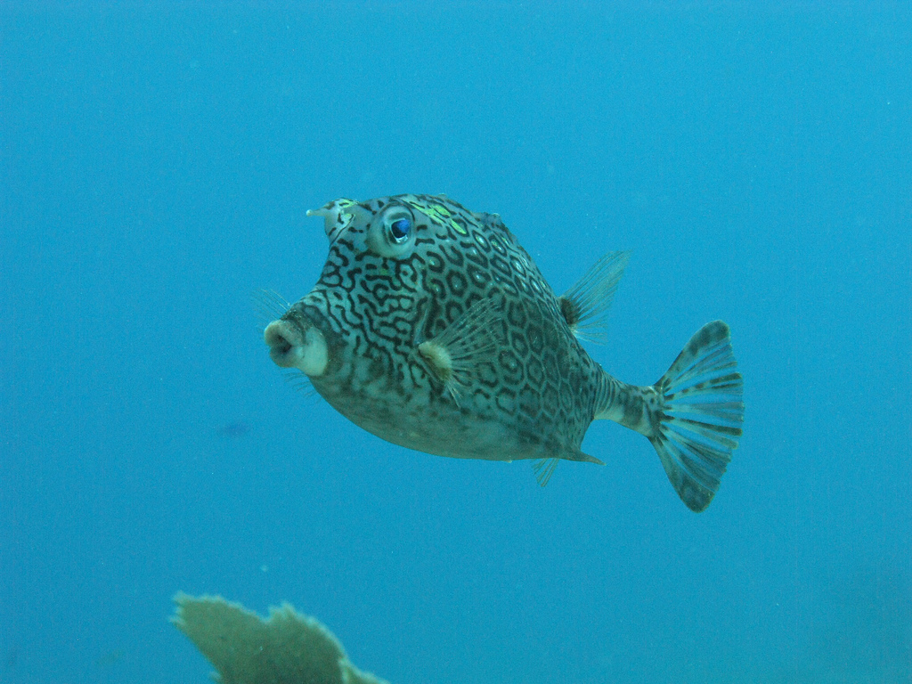 Scuba-Diving-Isla-Mujeres-Fish-CareyDiveCenter-13