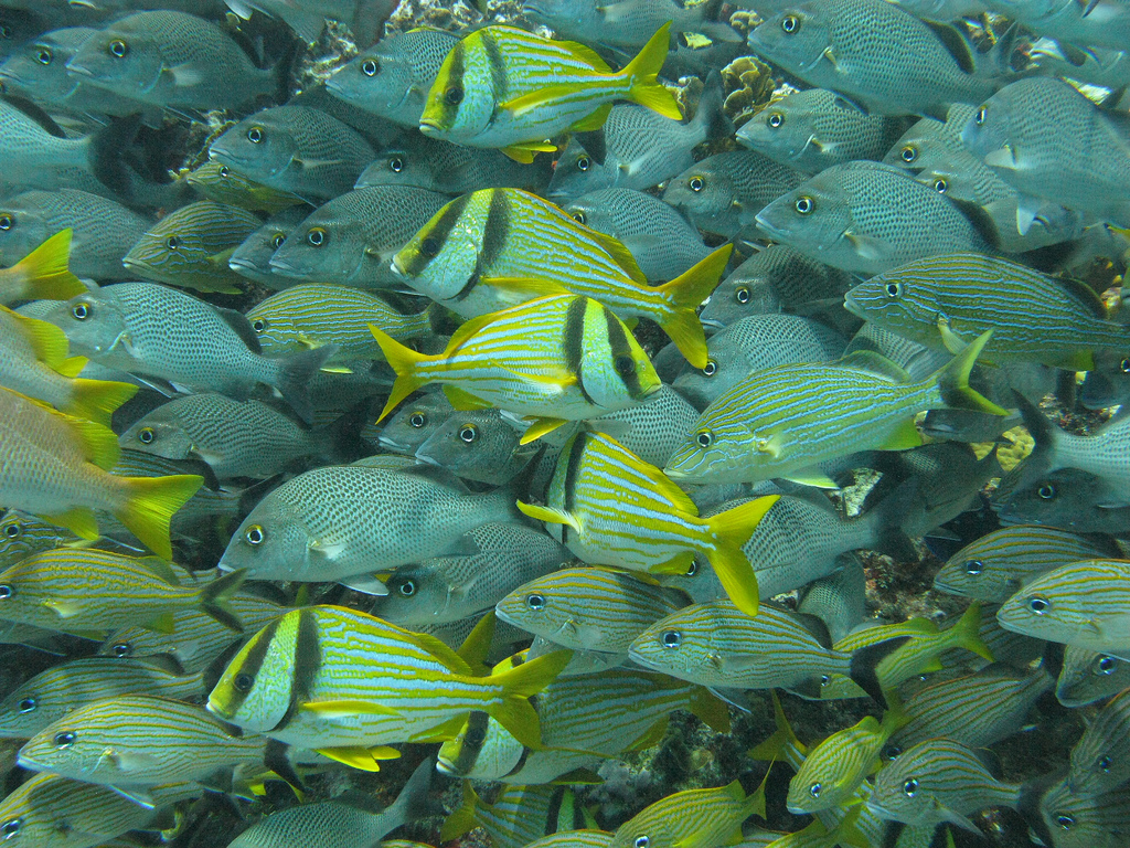 Scuba-Diving-Isla-Mujeres-Fish-CareyDiveCenter-14