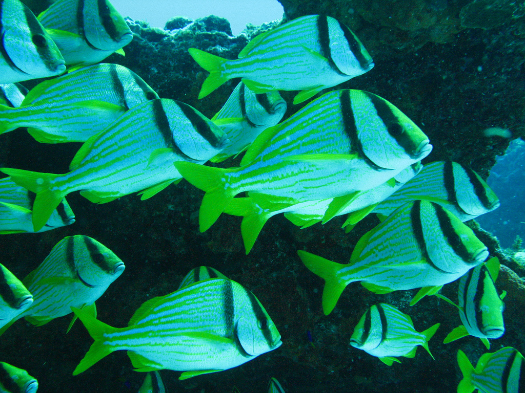 Scuba-Diving-Isla-Mujeres-Fish-CareyDiveCenter-5