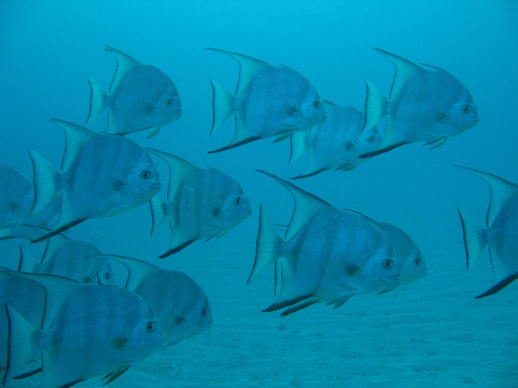 Scuba-Diving-Isla-Mujeres-Fish-CareyDiveCenter-6