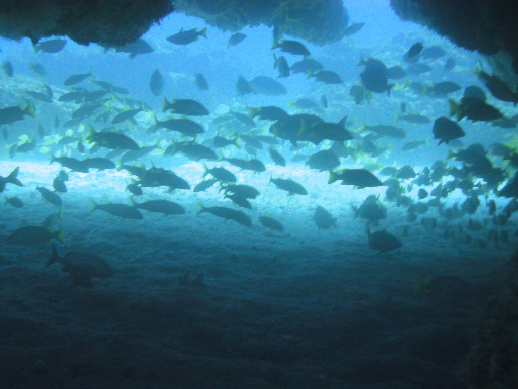 Scuba-Diving-Isla-Mujeres-Fish-CareyDiveCenter-8