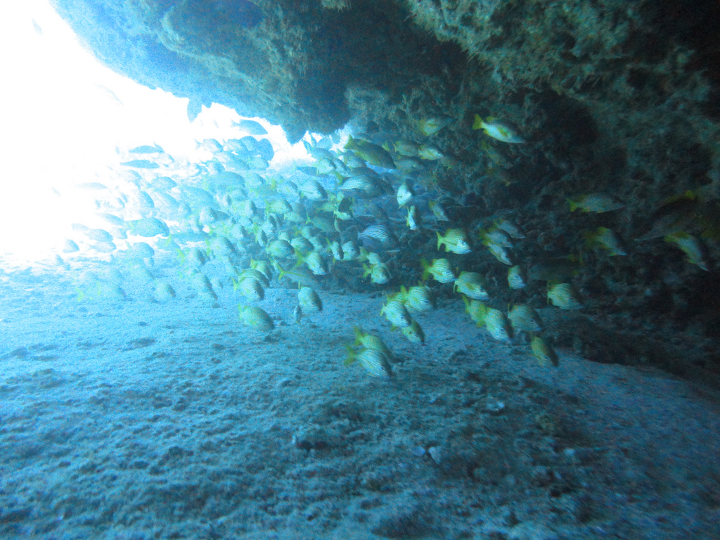 Scuba-Diving-Isla-Mujeres-Fish-CareyDiveCenter-9