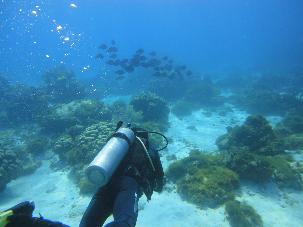 Scuba-Diving-Isla-Mujeres-Mexico-CareyDiveCenter-9