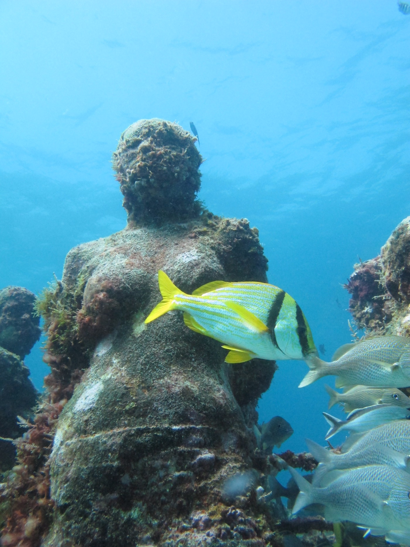 MUSA-Underwater-Museum-Snorkeling-Scuba-Diving-Tours-Isla-Mujeres-Carey-Dive-Center-1