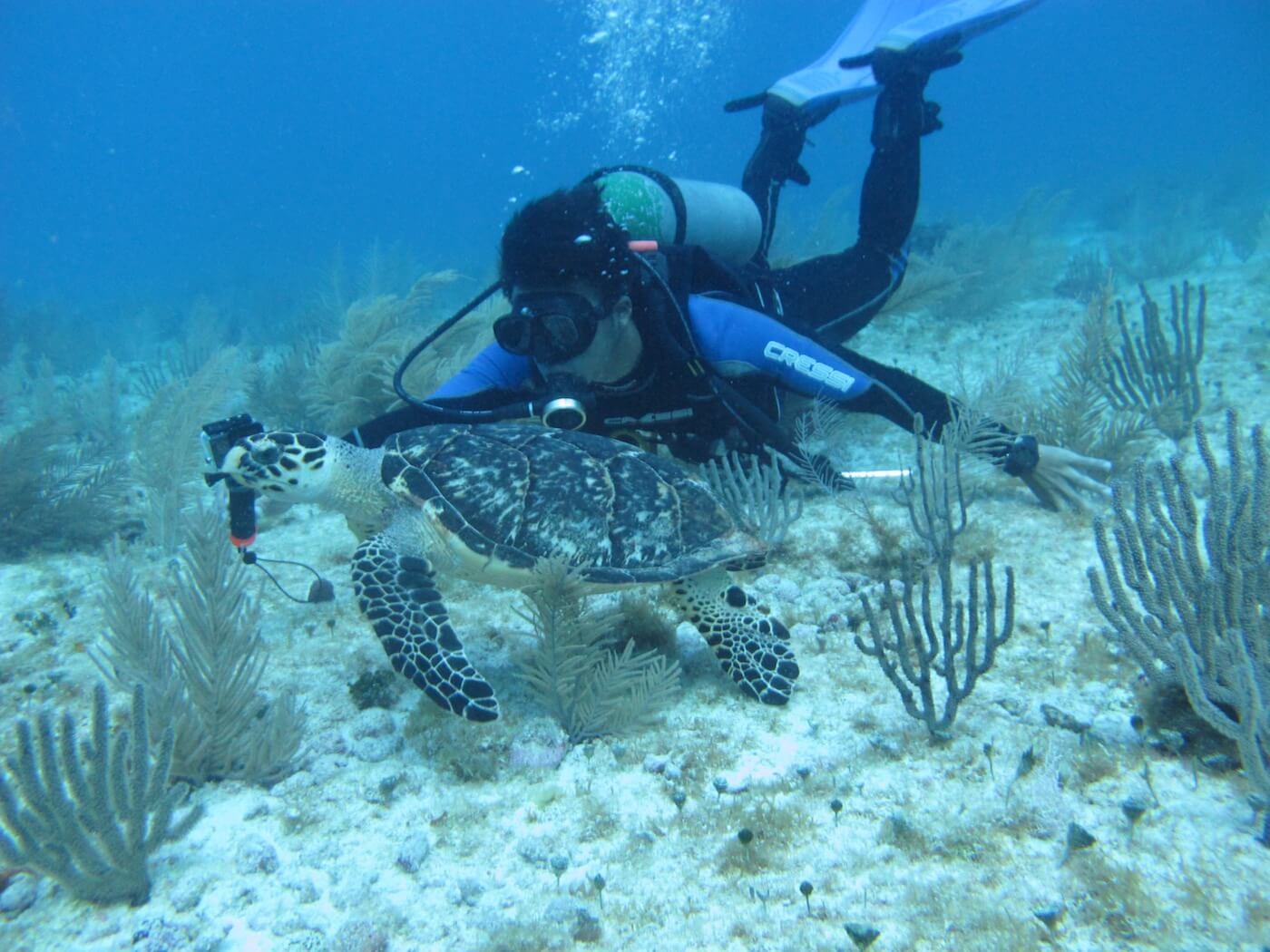 Sea-Turtle-Snorkeling-Scuba-Diving-Tours-Isla-Mujeres-Carey-Dive-Center-11