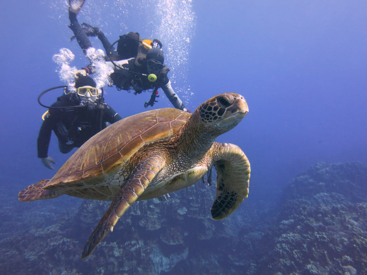 Sea-Turtle-Snorkeling-Scuba-Diving-Tours-Isla-Mujeres-Carey-Dive-Center-12