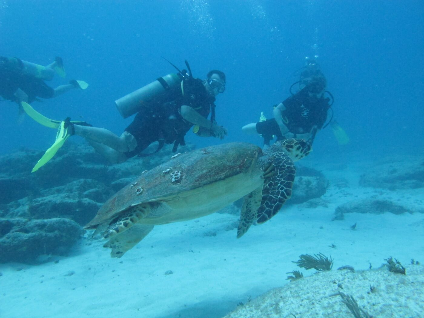 Sea-Turtle-Snorkeling-Scuba-Diving-Tours-Isla-Mujeres-Carey-Dive-Center-3