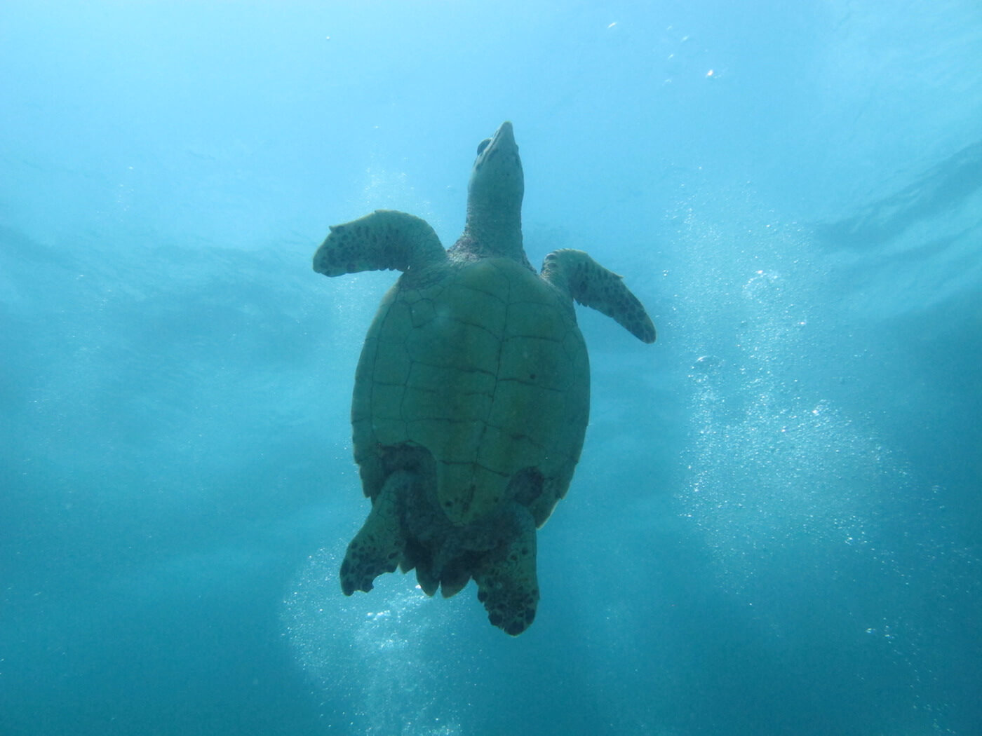 Sea-Turtle-Snorkeling-Scuba-Diving-Tours-Isla-Mujeres-Carey-Dive-Center-6