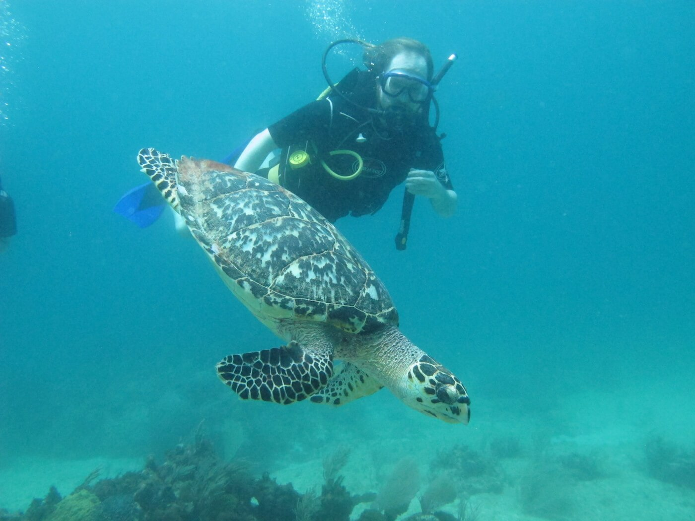 Sea-Turtle-Snorkeling-Scuba-Diving-Tours-Isla-Mujeres-Carey-Dive-Center-7