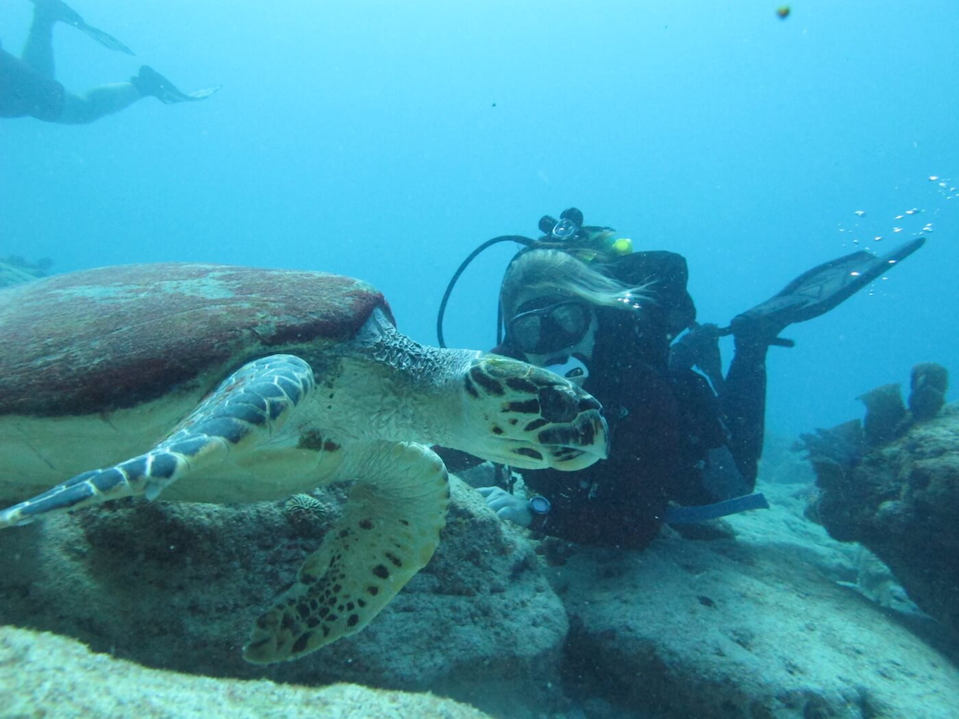 Sea-Turtle-Snorkeling-Scuba-Diving-Tours-Isla-Mujeres-Carey-Dive-Center-8