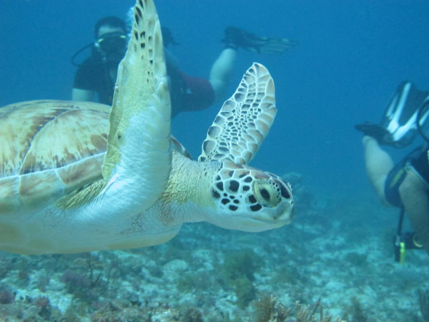 Sea-Turtle-Snorkeling-Scuba-Diving-Tours-Isla-Mujeres-Carey-Dive-Center-9