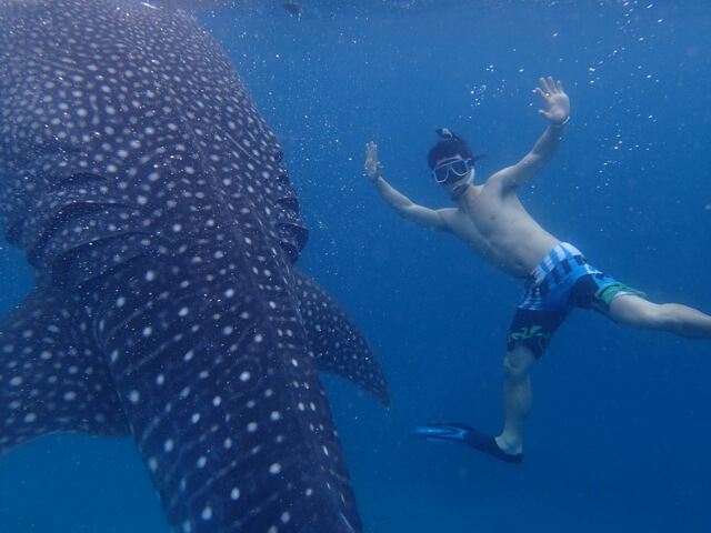 Whale-Shark-Snorkeling-Tours-Isla-Mujeres-Carey-Dive-Center-2