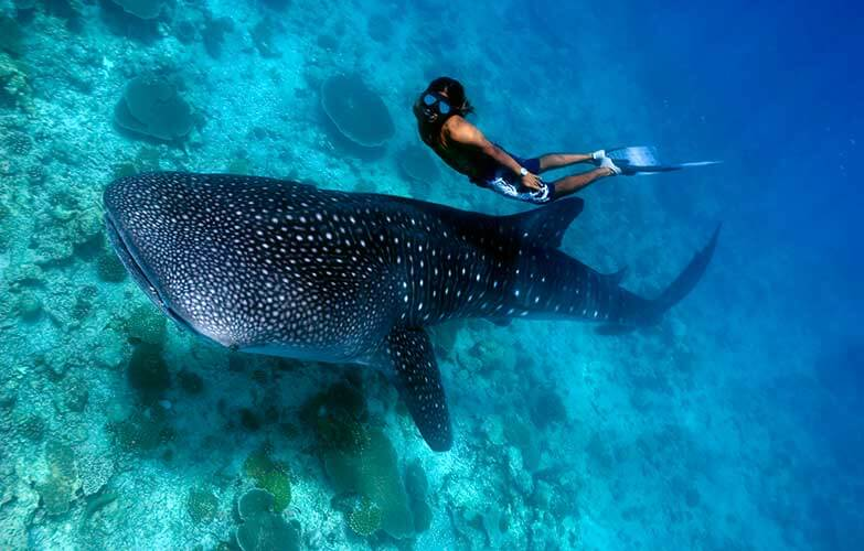 Whale-Shark-Snorkeling-Tours-Isla-Mujeres-Carey-Dive-Center-5