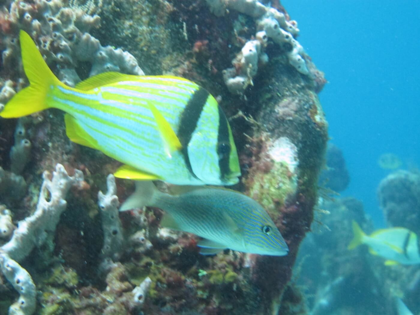 Wildlife-Snorkeling-Scuba-Diving-Tours-Isla-Mujeres-Carey-Dive-Center-1