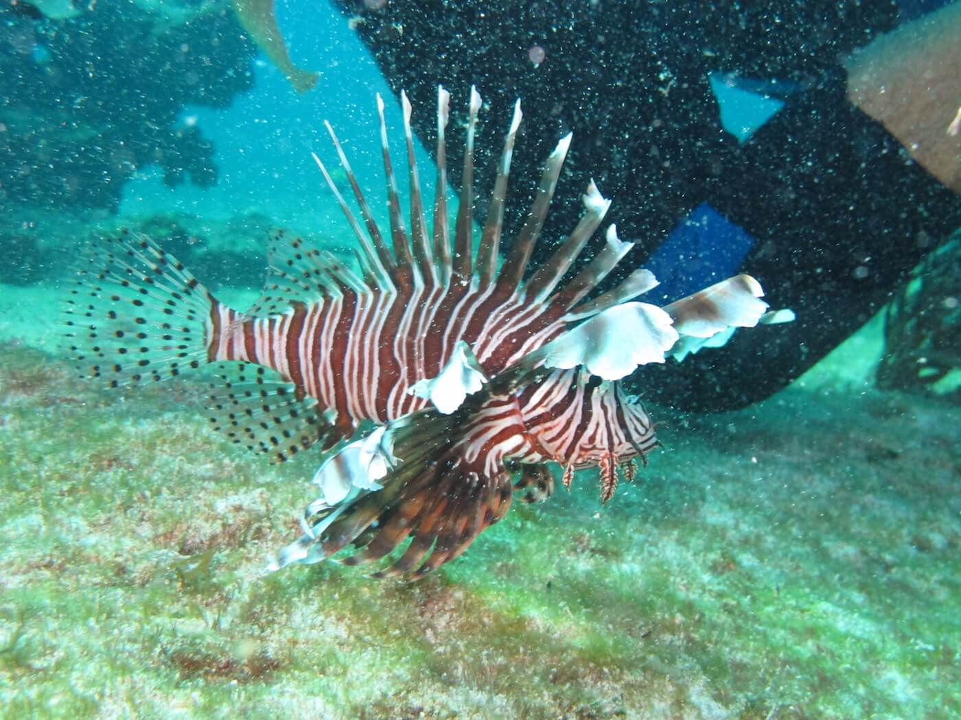 Wildlife-Snorkeling-Scuba-Diving-Tours-Isla-Mujeres-Carey-Dive-Center-13