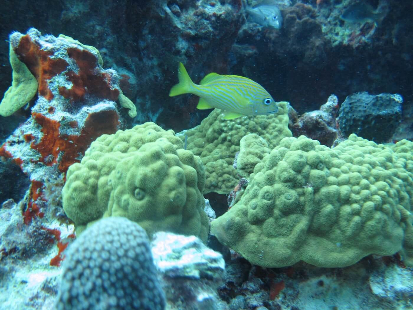 Wildlife-Snorkeling-Scuba-Diving-Tours-Isla-Mujeres-Carey-Dive-Center-17