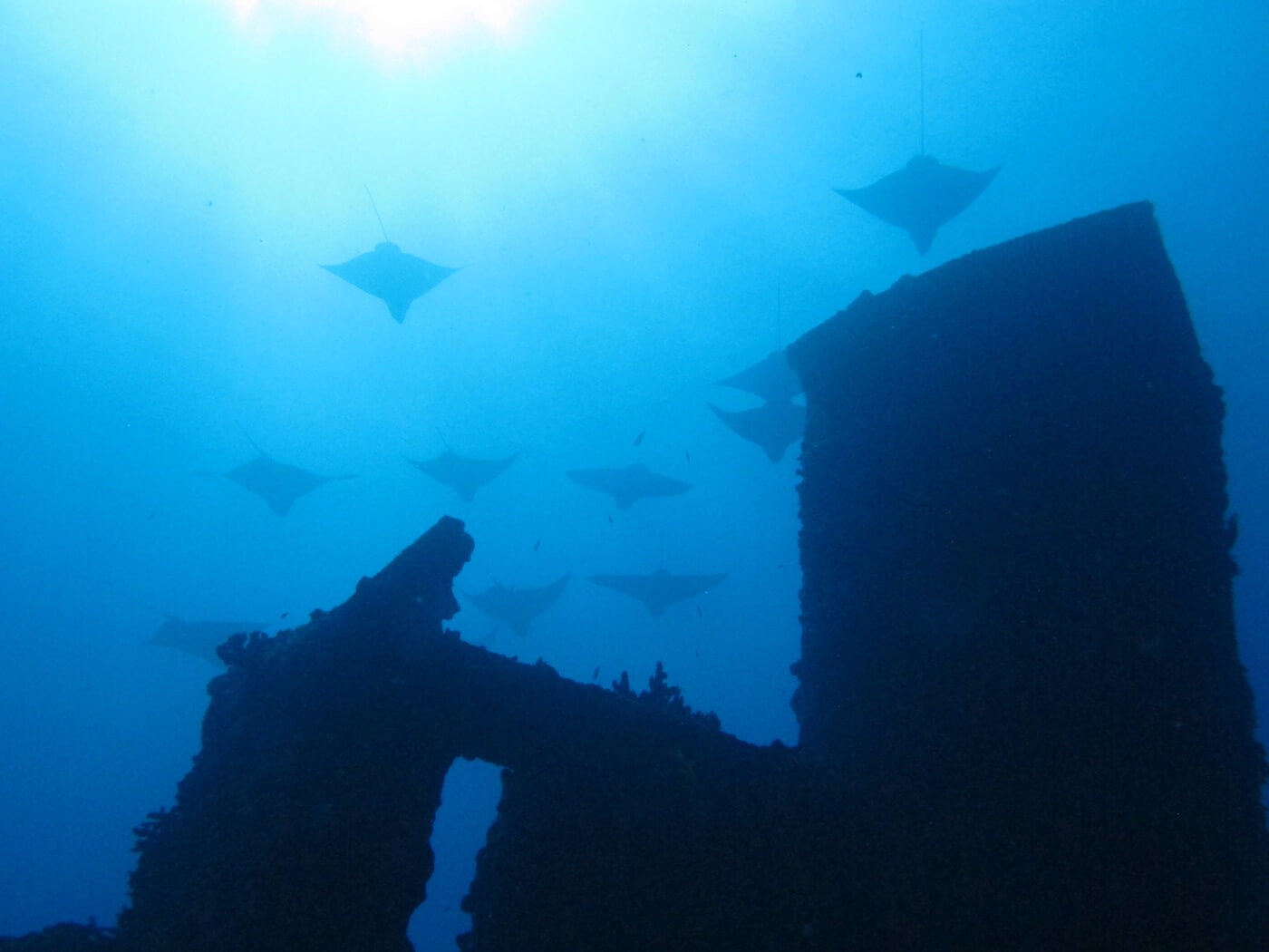 Wreck-Scuba-Diving-Tours-Isla-Mujeres-Carey-Dive-Center-4