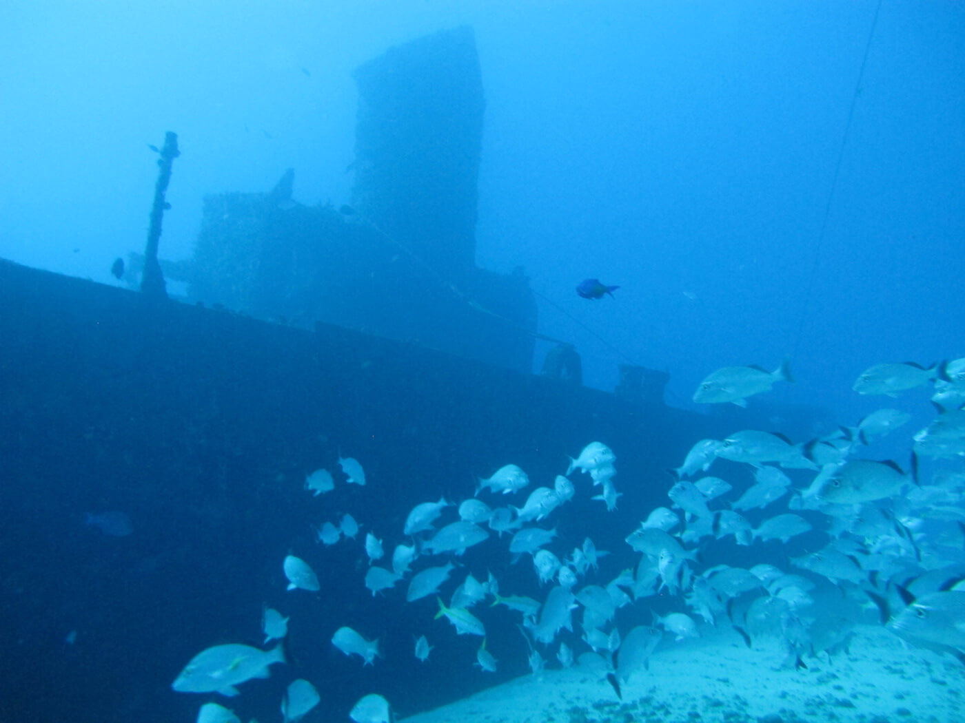 Wreck-Scuba-Diving-Tours-Isla-Mujeres-Carey-Dive-Center-6