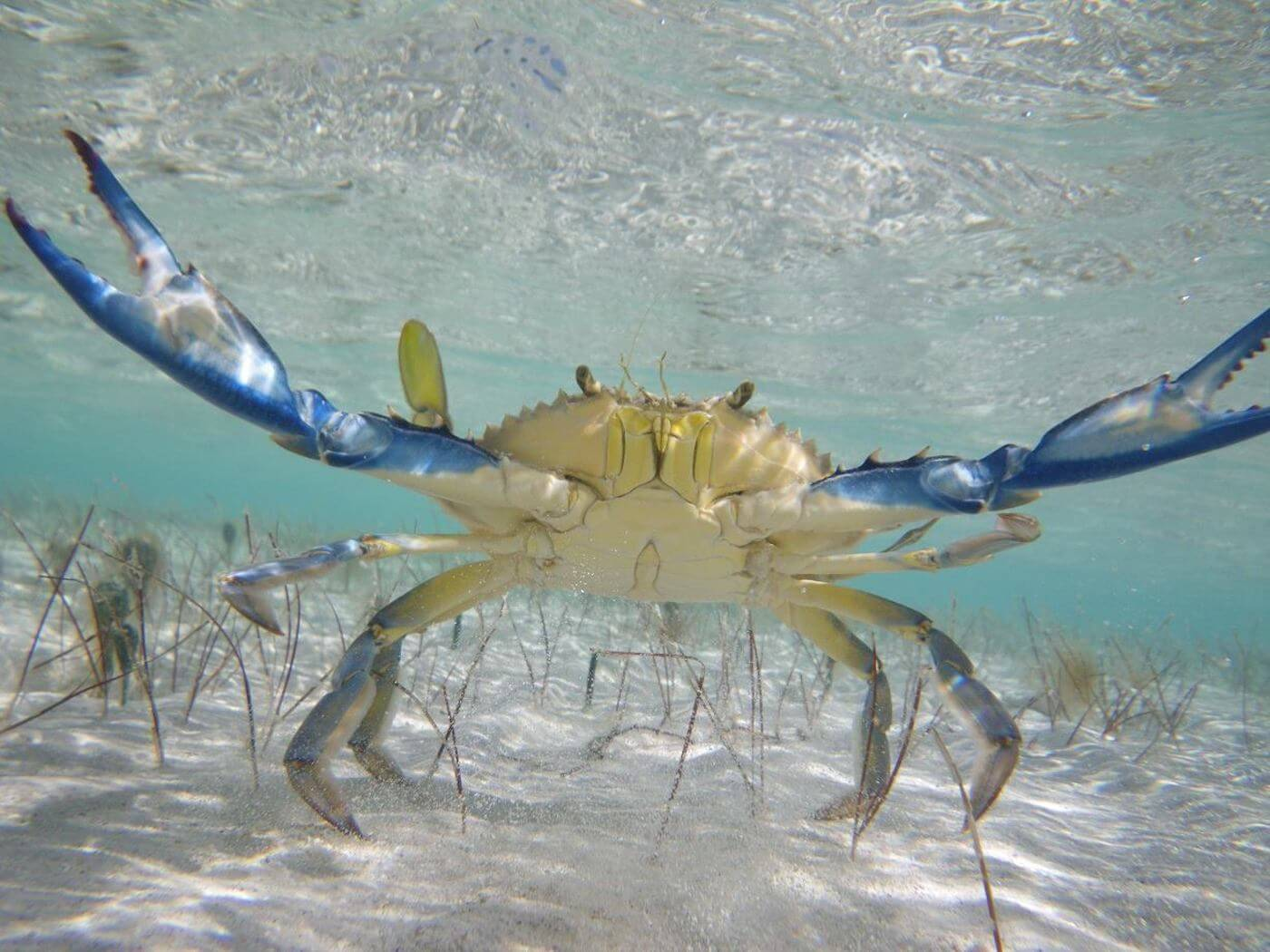 Isla-Contoy-Tours-Snorkel-Beach-All-Inclusive-Cancun-11