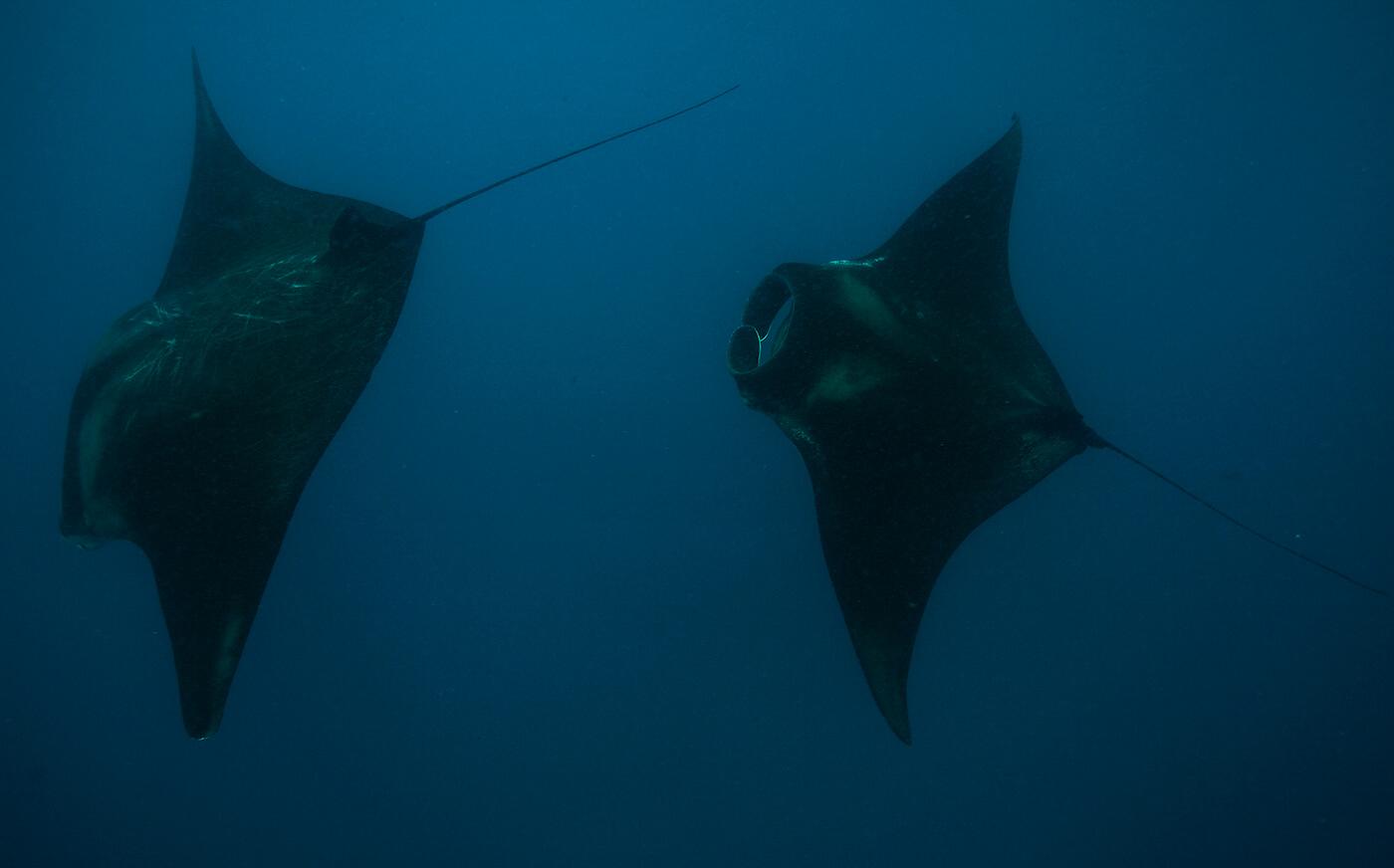 Whale-Shark-Tours-Cancun-Isla-Mujeres-Riviera-Maya-14