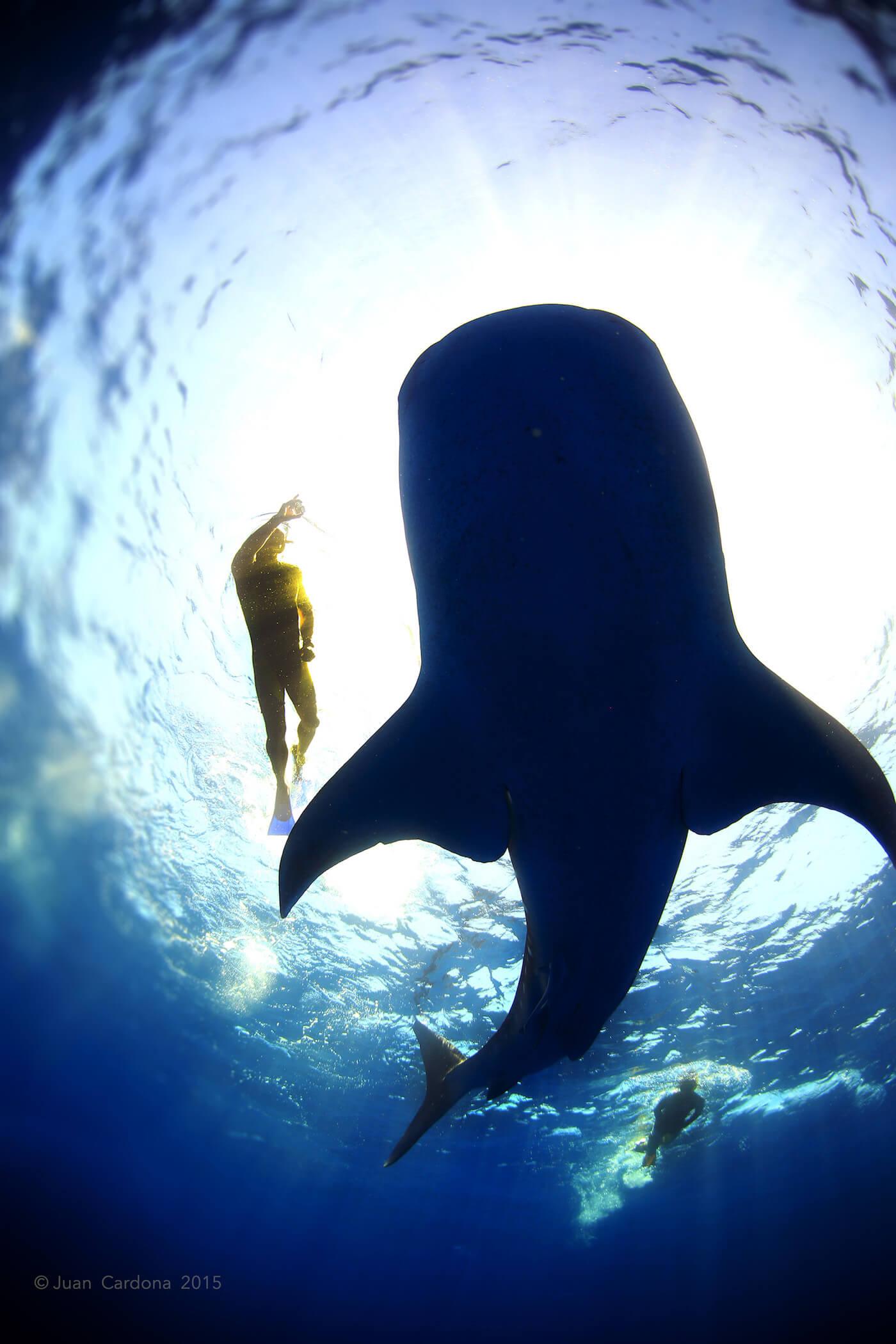 Whale-Shark-Tours-Cancun-Isla-Mujeres-Riviera-Maya-7